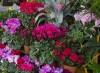 Torna-la-Mostra-mercato-di-piante-e-fiori-con-l-edizione-primaverile-dall-8-al-9-maggio-nei-giardini-della-fontana-di-San-Prospero